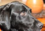 Barkley stare