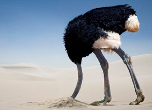 ostrich1